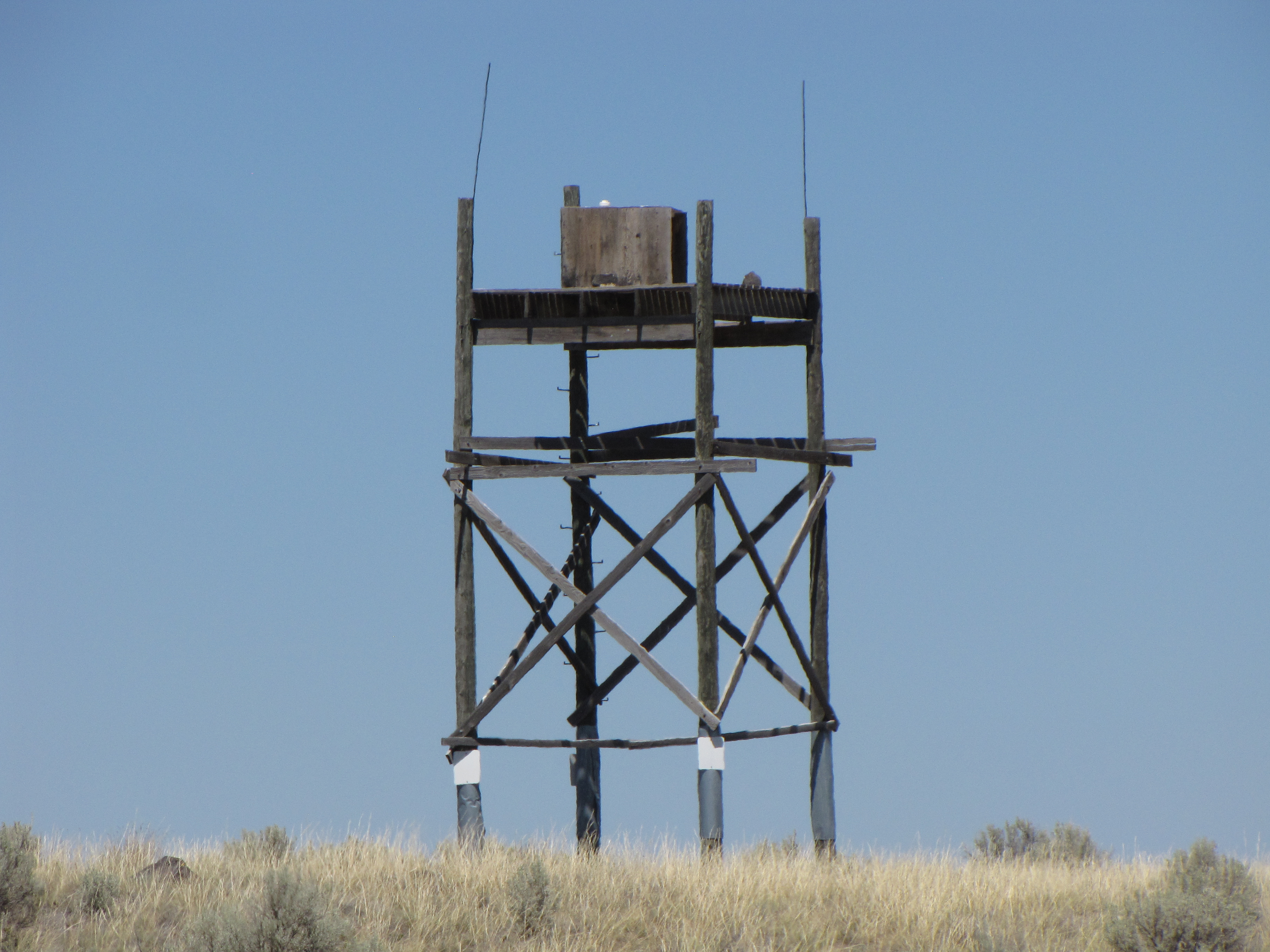 Peregrine Falcon Nesting Tower